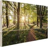 Een bospad op een zonnige dag Hout 160x120 cm - Foto print op Hout (Wanddecoratie) XXL / Groot formaat!
