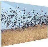 Groep ganzen Glas 180x120 cm - Foto print op Glas (Plexiglas wanddecoratie) XXL / Groot formaat!