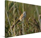 Beeld van een baardman in het riet Canvas 30x20 cm - klein - Foto print op Canvas schilderij (Wanddecoratie woonkamer / slaapkamer)