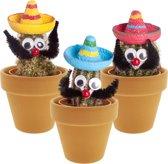 Desertworld Mexicaan Cactus met Sombrero - 3 Stuks + Terracotta Potjes