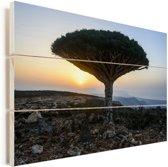 Bekende drakenbloedboom bij Jemen in het Midden-Oosten Vurenhout met planken 90x60 cm - Foto print op Hout (Wanddecoratie)