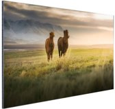 IJslandse paarden in het veld Aluminium 90x60 cm - Foto print op Aluminium (metaal wanddecoratie)
