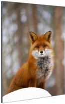Rode vos in het bos Aluminium 20x30 cm - klein - Foto print op Aluminium (metaal wanddecoratie)