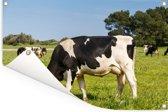 Friese koeien grazen in het groene veld Tuinposter 60x40 cm - klein - Tuindoek / Buitencanvas / Schilderijen voor buiten (tuin decoratie)