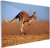 Actiefoto van kangoeroe Glas 60x40 cm - Foto print op Glas (Plexiglas wanddecoratie)