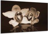 Glasschilderij Orchidee | Sepia, Bruin | 120x70cm 1Luik | Foto print op Glas |  F001887
