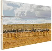 Kudde struisvogels fotoafdruk Hout 120x80 cm - Foto print op Hout (Wanddecoratie)