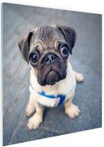 FotoCadeau.nl - Puppy ogen Glas 50x50 cm - Foto print op Glas (Plexiglas wanddecoratie)