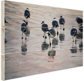 Meeuwen in het water Hout 60x40 cm - Foto print op Hout (Wanddecoratie)