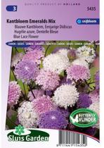 Sluis Garden Kantbloem Emeralds Mix (didiscus)