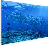 Vissenschool in de Bandazee bij het Nationaal park Wakatobi in Indonesië Plexiglas 90x60 cm - Foto print op Glas (Plexiglas wanddecoratie)