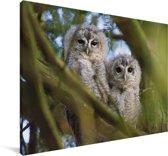 Twee bosuilen in een boom Canvas 140x90 cm - Foto print op Canvas schilderij (Wanddecoratie woonkamer / slaapkamer)
