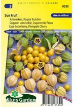 Sluis Garden - Ananaskers (Physalis peruviana)