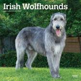 Irish Wolfhounds 2020 Square Wall Calendar
