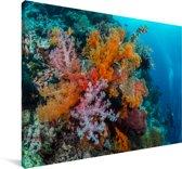 Kleurrijk zacht koraal in het Maritiempark Wakatobi in Indonesië Canvas 60x40 cm - Foto print op Canvas schilderij (Wanddecoratie woonkamer / slaapkamer)