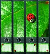 Rugetiket Ladybird