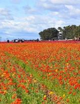 Road to Something New V.1 I.2 - the Flower Fields