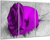Glasschilderij Roos | Paars, Grijs | 120x80cm 3Luik | Foto print op Glas |  F003609