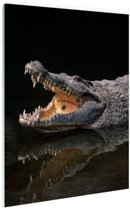 FotoCadeau.nl - Nijl krokodil Glas 40x60 cm - Foto print op Glas (Plexiglas wanddecoratie)