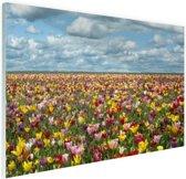 Tulpenvelden in Oregon Glas 120x80 cm - Foto print op Glas (Plexiglas wanddecoratie)