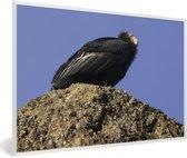 Foto in lijst - Een Californische condor op een rots met blauwe achtergrond fotolijst wit 60x40 cm - Poster in lijst (Wanddecoratie woonkamer / slaapkamer)