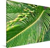Een groene sagopalm Canvas 160x120 cm - Foto print op Canvas schilderij (Wanddecoratie woonkamer / slaapkamer) XXL / Groot formaat!
