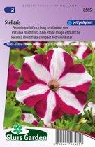 Sluis Garden - Petunia Stellaris