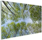 Foto van het bos in de zomer Glas 120x80 cm - Foto print op Glas (Plexiglas wanddecoratie)