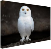 Sneeuwuil Canvas 80x60 cm - Foto print op Canvas schilderij (Wanddecoratie woonkamer / slaapkamer) / Dieren Canvas Schilderijen