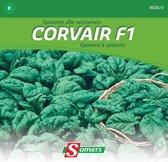 Somers zaden - Spinazie Corvair F1