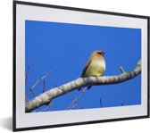 Foto in lijst - Japanse pestvogel onder een knalblauwe lucht fotolijst zwart met witte passe-partout klein 40x30 cm - Poster in lijst (Wanddecoratie woonkamer / slaapkamer)