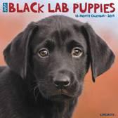 Black Lab Puppies 2019 Kalender