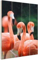 Flamingos in de regen Hout 80x120 cm - Foto print op Hout (Wanddecoratie)