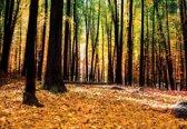 Fotobehang Forest Woods   M - 104cm x 70.5cm   130g/m2 Vlies