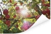Zonlicht tussen de appels Poster 90x60 cm - Foto print op Poster (wanddecoratie woonkamer / slaapkamer)