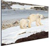 Moeder en zoon ijsbeer Aluminium 60x40 cm - Foto print op Aluminium (metaal wanddecoratie)