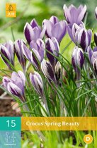 Crocus Spring Beauty - kleinbloemige krokus - 4 sets