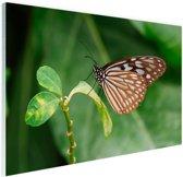 Vlinder op groen blad Glas 90x60 cm - Foto print op Glas (Plexiglas wanddecoratie)