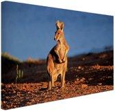 Kangoeroe zonsondergang Canvas 120x80 cm - Foto print op Canvas schilderij (Wanddecoratie)
