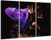 Canvas schilderij Roos   Paars, Bruin, Wit   120x80cm 3Luik