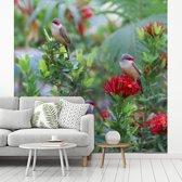 Fotobehang vinyl - Sint helenafazantjes op een bloemenstruik breedte 260 cm x hoogte 260 cm - Foto print op behang (in 7 formaten beschikbaar)