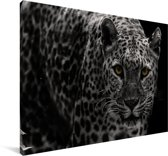 Zwart-wit foto van een gekleurde luipaard Canvas 180x120 cm - Foto print op Canvas schilderij (Wanddecoratie woonkamer / slaapkamer) XXL / Groot formaat!