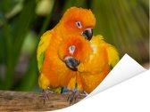 Twee Zonparkieten zitten op een boomstam Poster 40x30 cm - klein - Foto print op Poster (wanddecoratie woonkamer / slaapkamer)