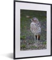 Foto in lijst - Een mooie gevlekte griel in de natuur fotolijst zwart met witte passe-partout klein 30x40 cm - Poster in lijst (Wanddecoratie woonkamer / slaapkamer)