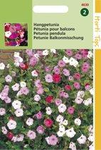Hortitops Zaden - Hangpetunia Gemengd