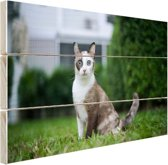 Siamese kat Hout 80x60 cm - Foto print op Hout (Wanddecoratie)