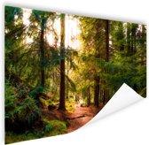 Een bospaadje door Amerikaans bos Poster 150x75 cm - Foto print op Poster (wanddecoratie woonkamer / slaapkamer)