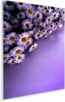 Paarse aster bloemen in de hoek Plexiglas 60x90 cm - Foto print op Glas (Plexiglas wanddecoratie)