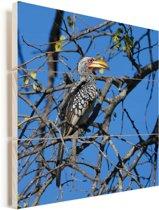 Een geel-gefactureerde Zuidelijke geelsnaveltok zit op een kale boom Vurenhout met planken 20x20 cm - klein - Foto print op Hout (Wanddecoratie)