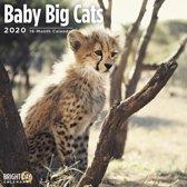 Little Big Cats Kalender 2020
